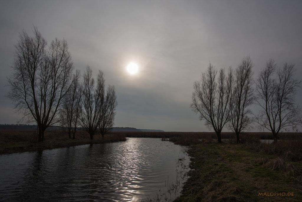 Kanalbäume-3