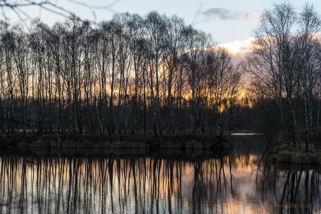 Birken Sonnenaufgang