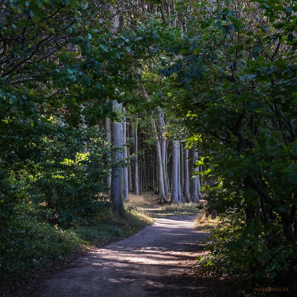 Gespensterwald-Durchblick
