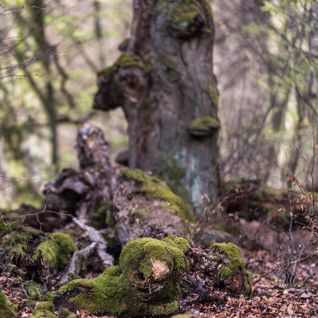 Tier im Wald