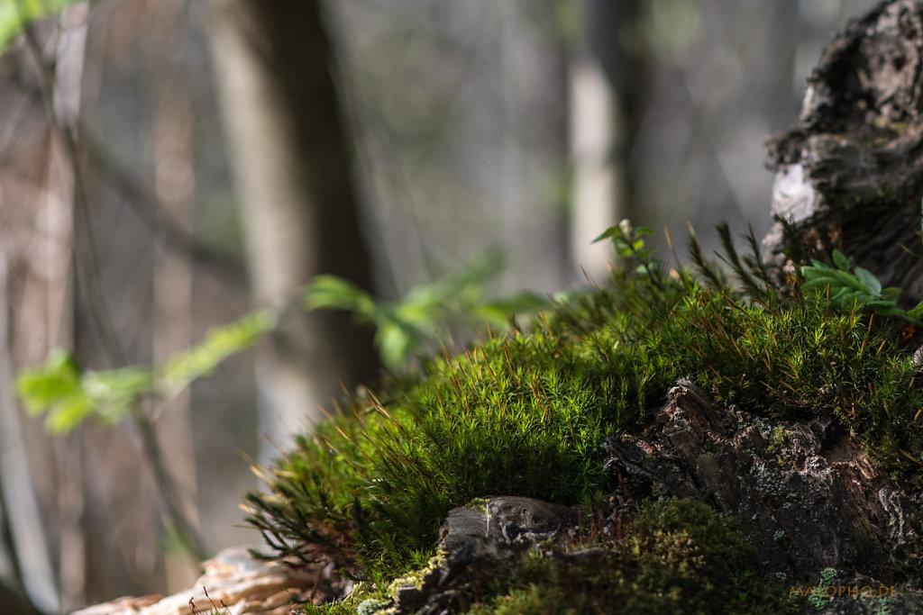 Microwald