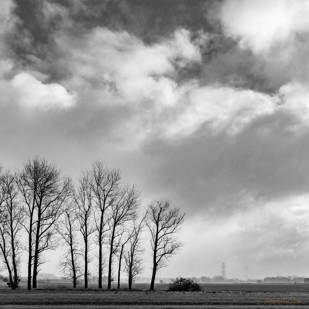 11 | 26 - Bäume unter Wolken
