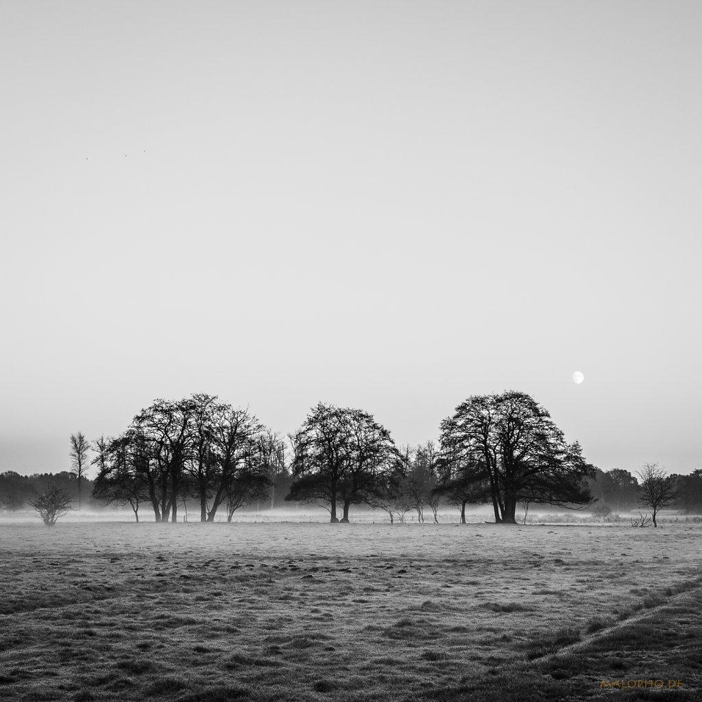 11 | 27 - Mondbäume