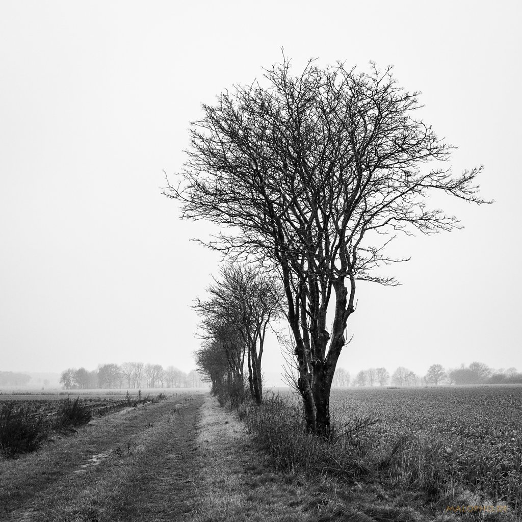 12 | 13 - Nebelweg