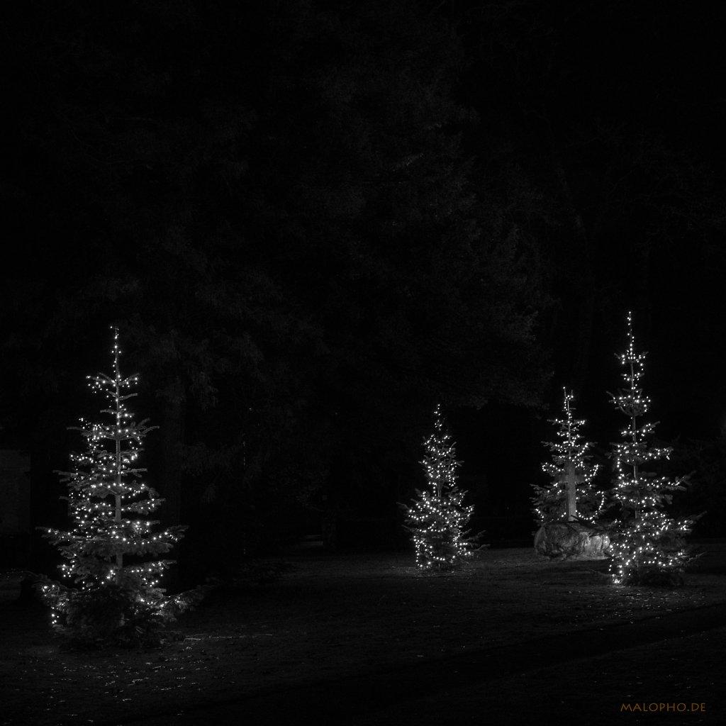 12 | 22 - Weihnachtsbaumsammlung