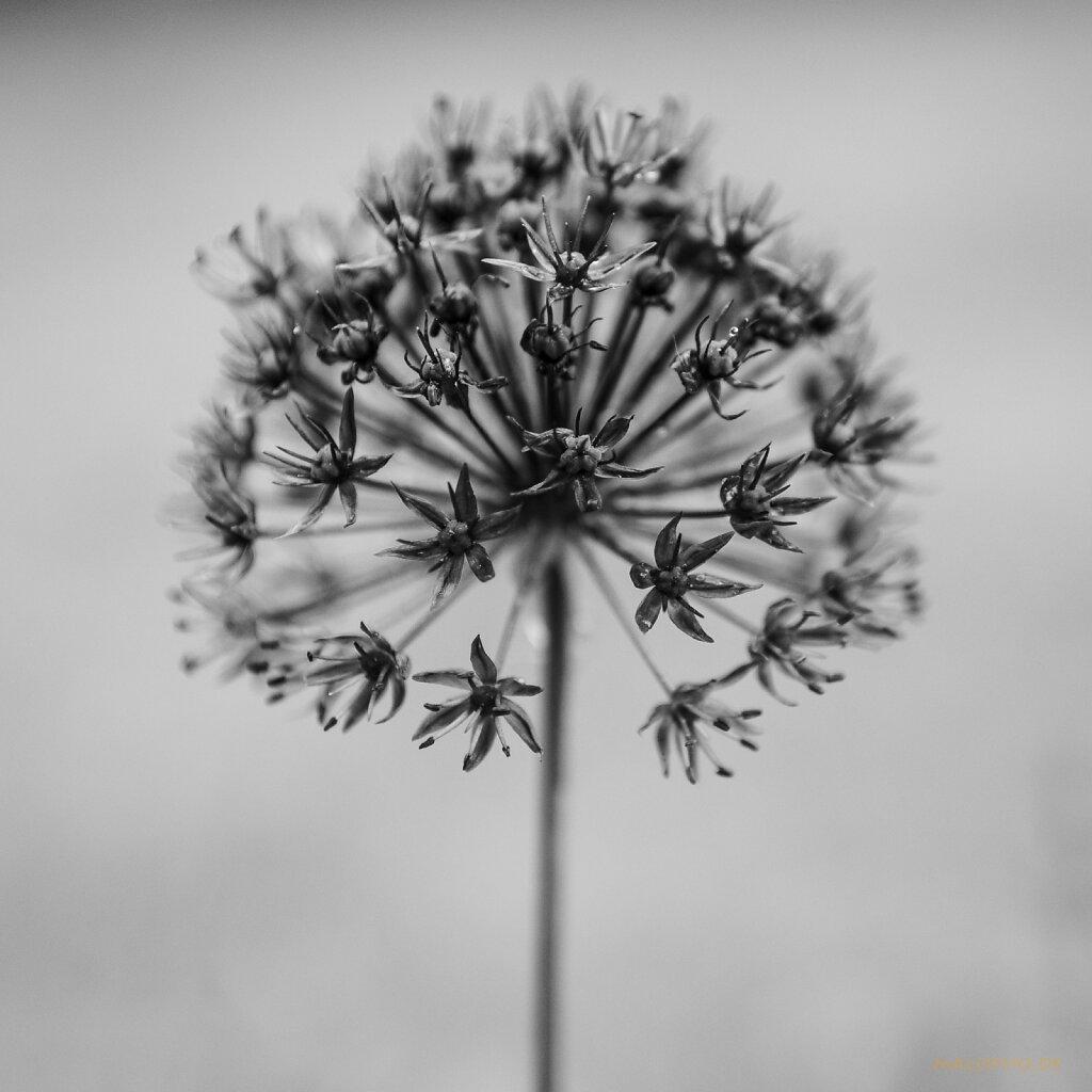 06 | 03 - Florale Skulptur
