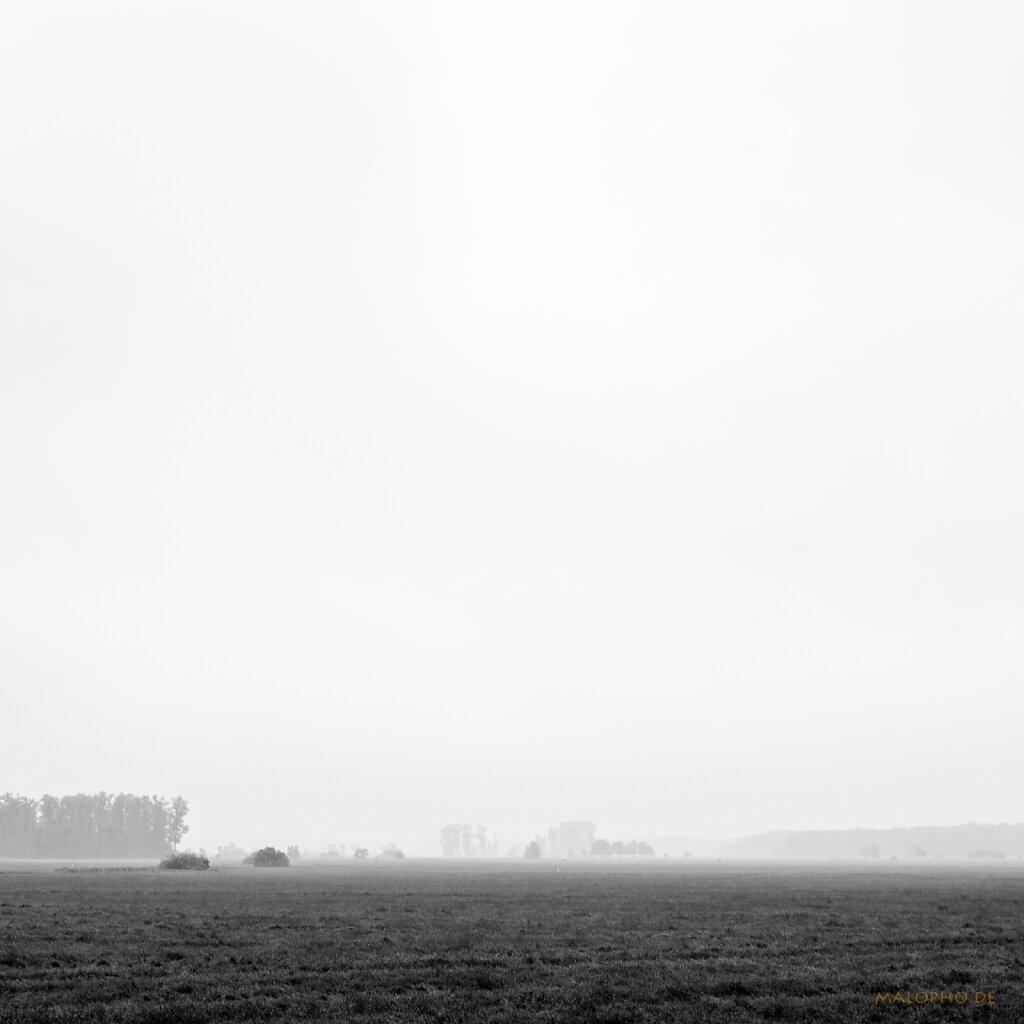 06 | 06 - Schwinge Nebelwiesen