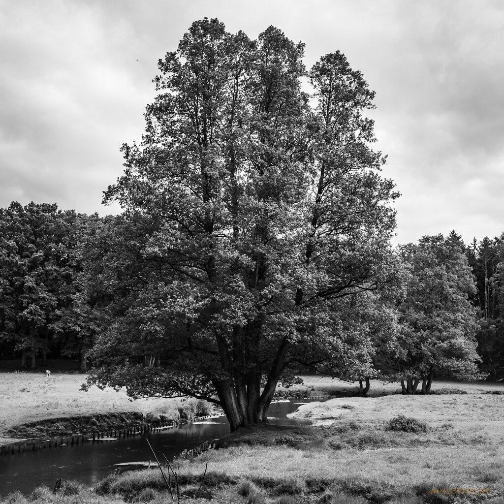 06 | 13 - Wildpark Beweisfoto