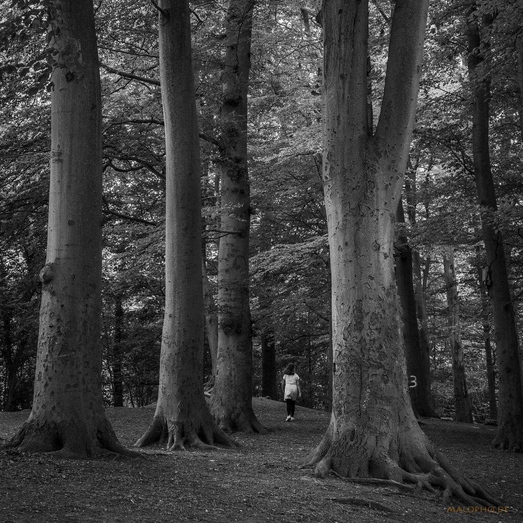 06 | 24 - Im Wald