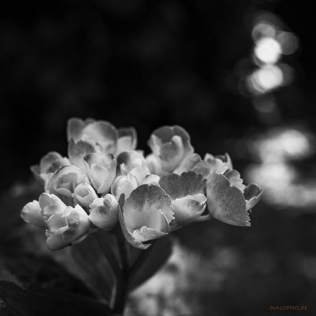 07 | 18 - Blumenstrauss