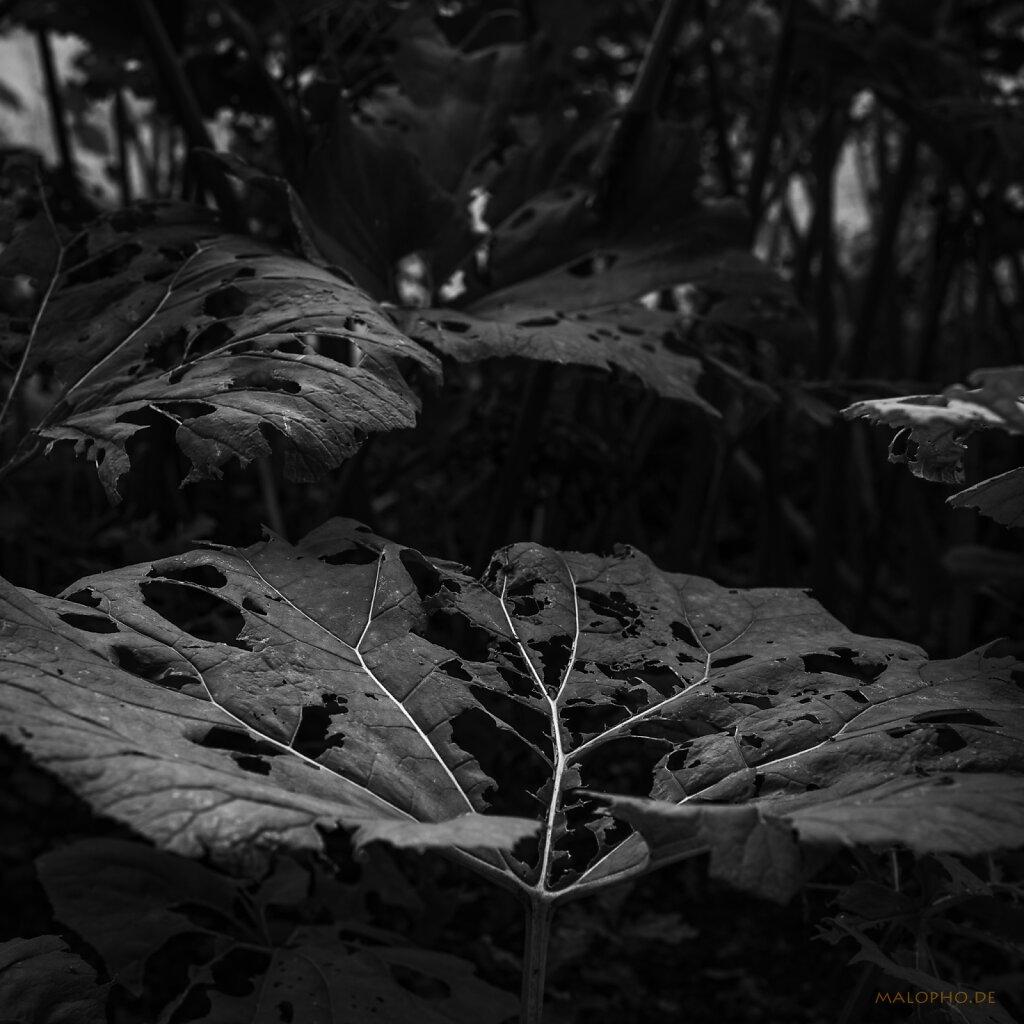 07 | 19 - Waldsuche