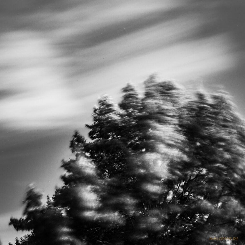 07 | 29 - Windig
