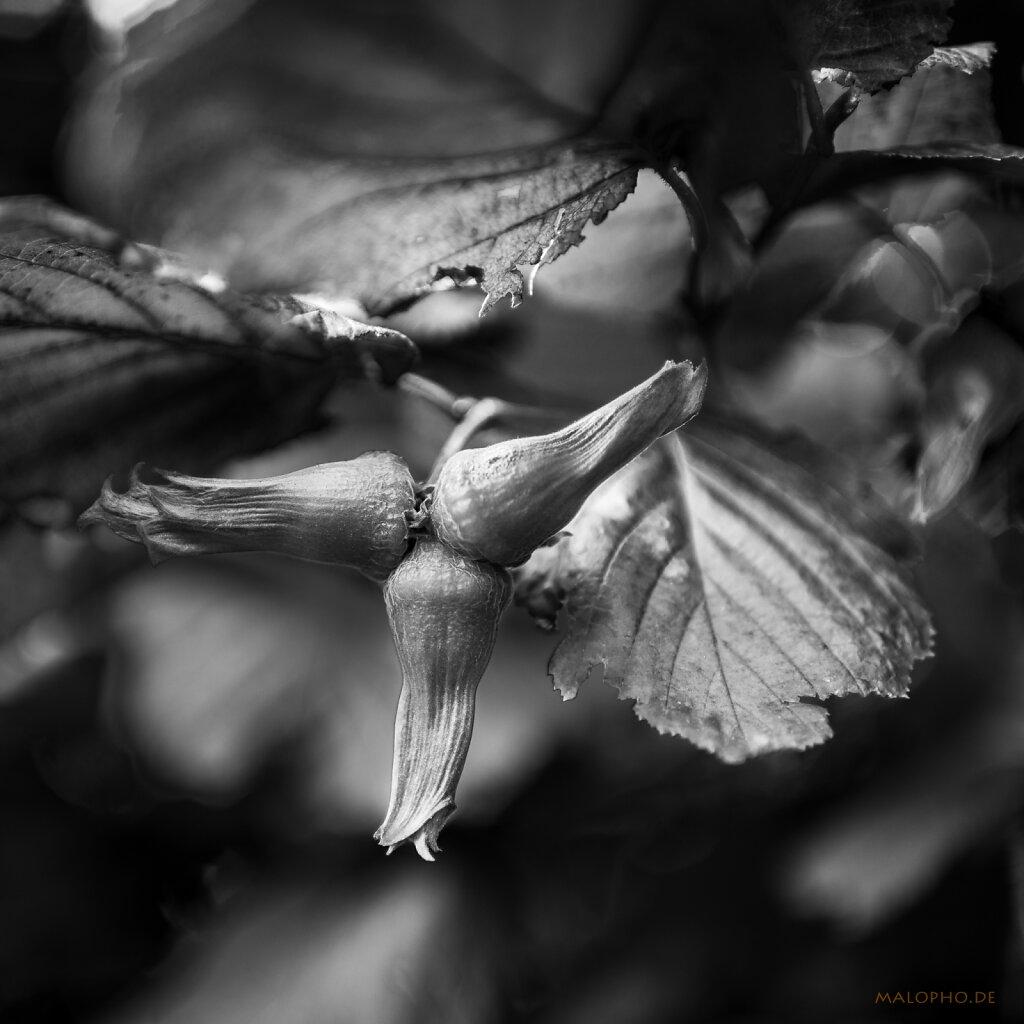 08 | 27 - Alienpflanze