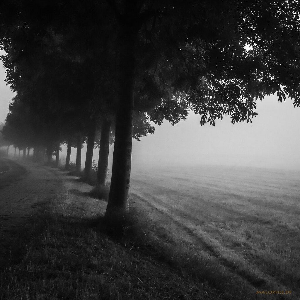 09 | 07 - Nebelreihe